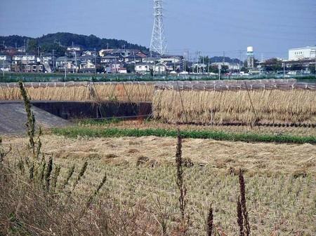 田園 1.jpg