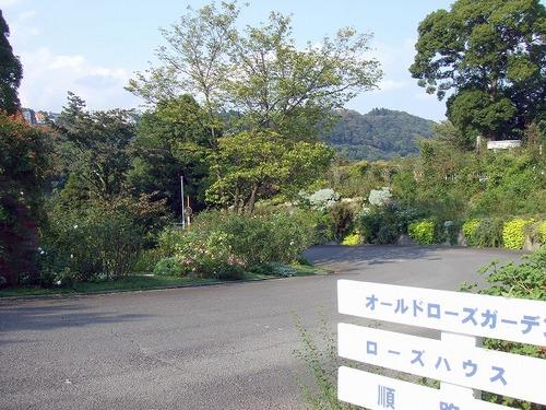 s-DSCF8321.jpg