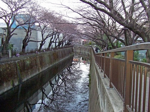 s-お花見10.jpg