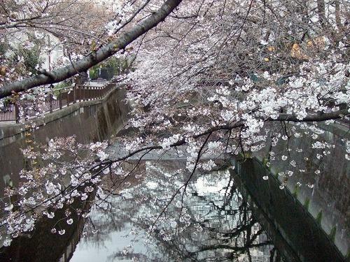 s-お花見7.jpg