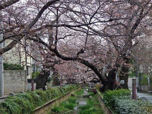 s-呑川4.jpg