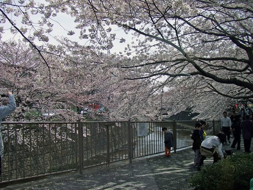 s-恩田川2.jpg