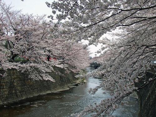 s-恩田川4.jpg