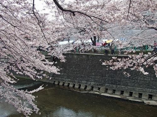s-恩田川6.jpg