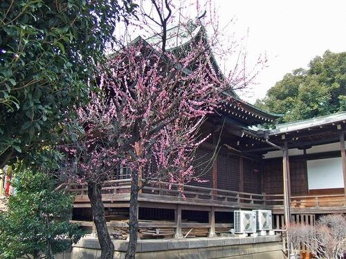 s-桜神宮5.jpg