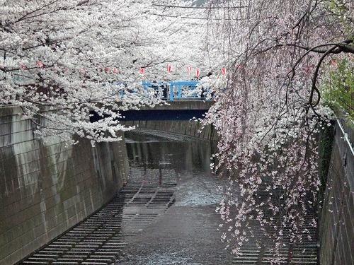 s-目黒川1.jpg