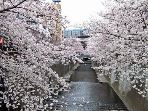 s-目黒川2.jpg