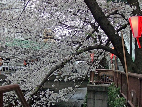 s-目黒川3.jpg