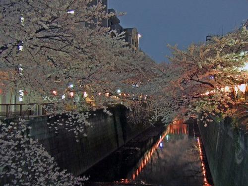 s-目黒川9.jpg