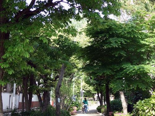 s-緑道.jpg