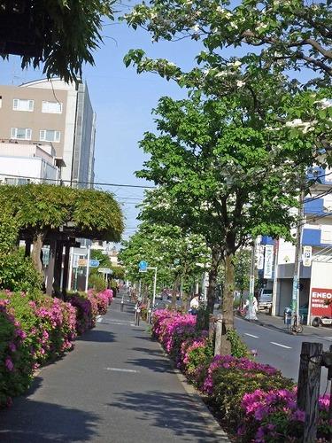 s-緑道1.jpg